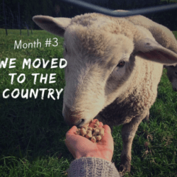 Our New Country Life: Things get Real.