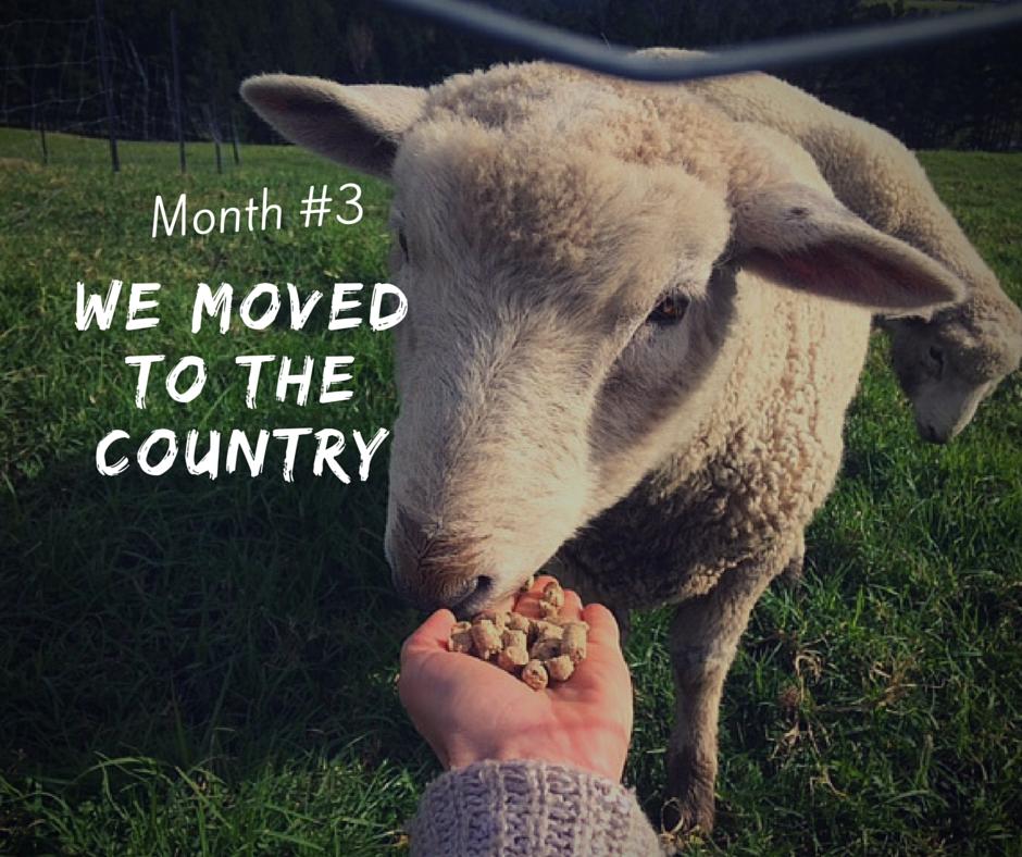Month 3 farm life