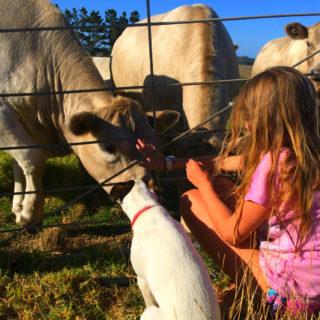 Farm life 2017