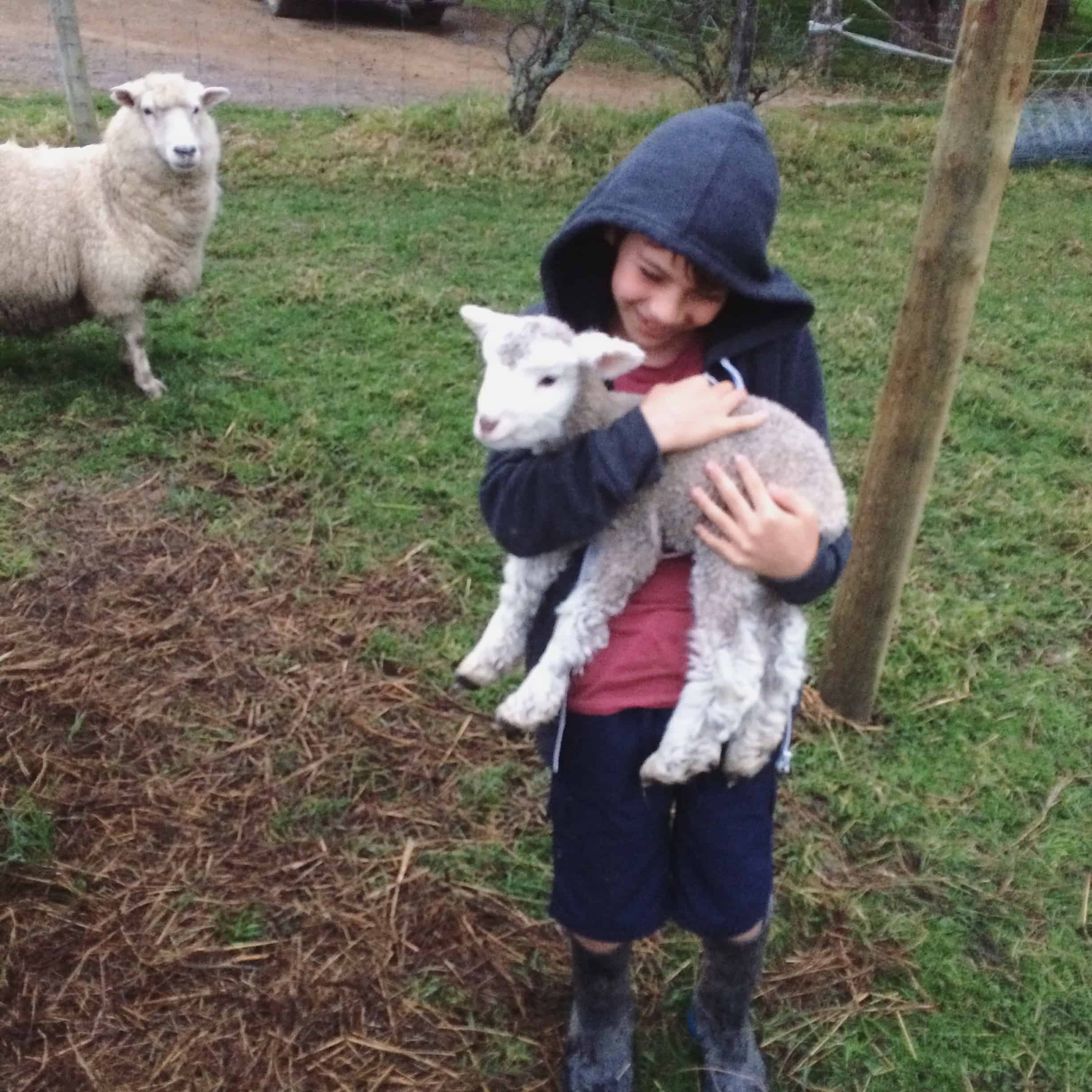 Here is Floppy from last years lambing season. He is my favourite.