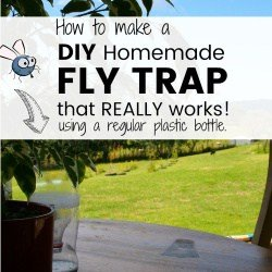 How to Make a Homemade Fly Trap with a Regular Plastic Bottle