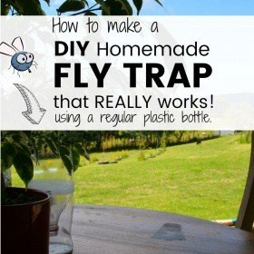 Homemade Fly Trap made from a Regular Plastic Bottle