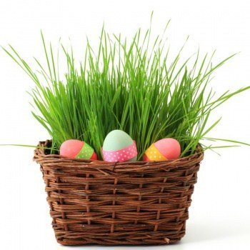 6 Fun & Useful Non Candy Easter Basket Ideas