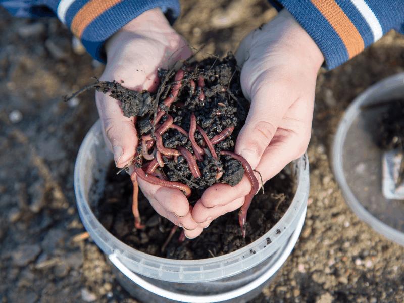worm-farm